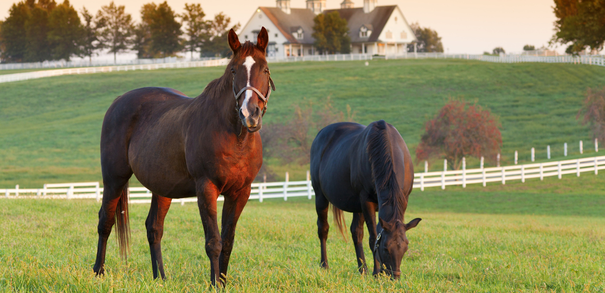 Horse Health | Vecchione Veterinary Equine Mobile Services